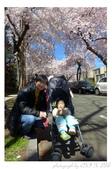 2013 Cherry Blossom(Wooster Square Park):P1000502.JPG