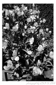 2013 Spring:P1000612.JPG