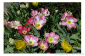 2013 Spring:P1000614.JPG