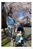 2013 Cherry Blossom(Wooster Square Park):P1000503.JPG