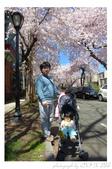 2013 Cherry Blossom(Wooster Square Park):P1000504.JPG