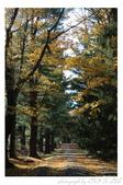 2012 秋季剪輯II - Topsmead State Forest:DSC_6895.jpg