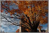 ESSEX-秋天的小鎮(Town in Fall):DSC_2166.jpg