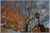 ESSEX-秋天的小鎮(Town in Fall):DSC_2167.jpg