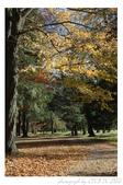 2012 秋季剪輯II - Topsmead State Forest:DSC_6906.jpg
