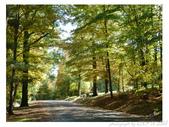 2012 秋季剪輯III - Brook Glen Park & Town of Litchfi:P1020513.JPG