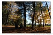 2012 秋季剪輯II - Topsmead State Forest:DSC_6907.jpg