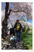 2013 Cherry Blossom(Wooster Square Park):P1000486.JPG