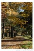 2012 秋季剪輯II - Topsmead State Forest:DSC_6909.jpg