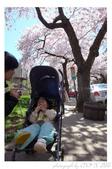 2013 Cherry Blossom(Wooster Square Park):P1000487.JPG