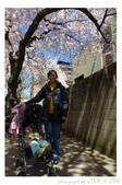2013 Cherry Blossom(Wooster Square Park):P1000489.JPG