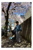2013 Cherry Blossom(Wooster Square Park):P1000491.JPG