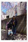 2013 Cherry Blossom(Wooster Square Park):P1000492.JPG