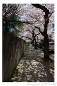 2013 Cherry Blossom(Wooster Square Park):P1000493.JPG