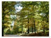 2012 秋季剪輯III - Brook Glen Park & Town of Litchfi:P1020517.JPG