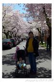 2013 Cherry Blossom(Wooster Square Park):P1000494.JPG