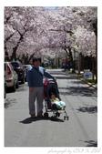 2013 Cherry Blossom(Wooster Square Park):P1000497.JPG