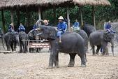 東南亞+南亞+中東:20101217大象學校 (230).jpg