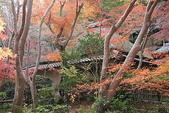 日本楓紅:2009年11月30日衹王寺 (15)