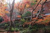 日本楓紅:2009年11月30日衹王寺 (14)