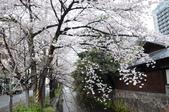 日本春天:2012年4月11日高瀨川 (17)_調整大