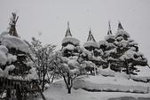 日本冬天:20110114小千谷錦鯉 (112)_調整大