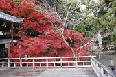 :20071203大覺寺 058.jpg