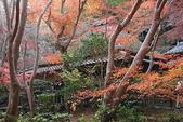 日本楓紅:2009年11月30日衹王寺 (17)