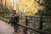 日本楓紅:20101122箕面公園 050_調整大小.jp