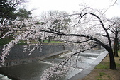 未分類相簿:20110408夙川公園 117_調整大小.jp