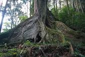 台灣走透透:20090709藤枝森林公園 136.jpg