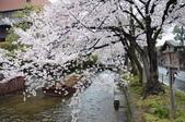 日本春天:2012年4月11日高瀨川 (13)_調整大