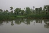 東南亞+南亞+中東:20110422西溪國家濕地公園 (33).jp