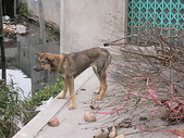 :2008年2月28日苦命的狗 (16).jpg