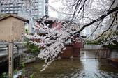 日本春天:2012年4月11日高瀨川 (9)_調整大小