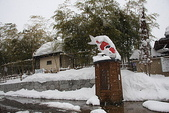 日本冬天:20110114小千谷錦鯉 (143)_調整大