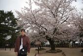 日本春天:20110411松山城 (22).jpg