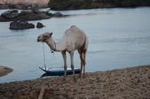 未分類相簿:2012年10月14日騎駱駝 (5).JPG