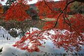 日本楓紅:2009年11月30日大覺寺 (228)