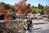 日本楓紅:20101020奧入瀨溪流 (64).JPG