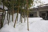 日本冬天:20110114小千谷錦鯉 (139)_調整大