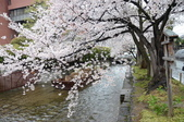 日本春天:2012年4月11日高瀨川 (18)_調整大