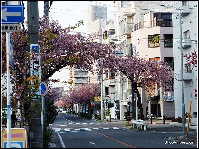P3300027.JPG - 名古屋地鐵櫻通線高岳站2號出口的櫻花