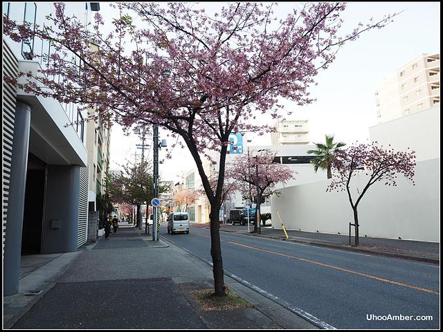 P3300007.JPG - 名古屋地鐵櫻通線高岳站2號出口的櫻花