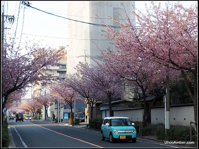 P3300037.JPG - 名古屋地鐵櫻通線高岳站2號出口的櫻花