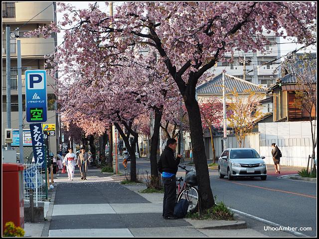P3300009.JPG - 名古屋地鐵櫻通線高岳站2號出口的櫻花