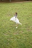 逢沢りな Rina Aizawa 4 如有侵權 請告知:315.jpg