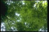 天空+風景:1309634660.jpg