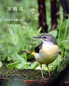 2009.10~11 鳥況 :IMG_6542.JPG