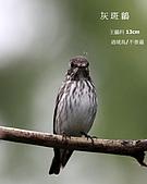 2009.10~11 鳥況 :IMG_6658.JPG